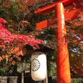 下鴨神社(賀茂御祖神社)の写真_793638