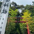 來宮神社の写真_909493