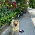 備瀬のフクギ並木の写真_924172