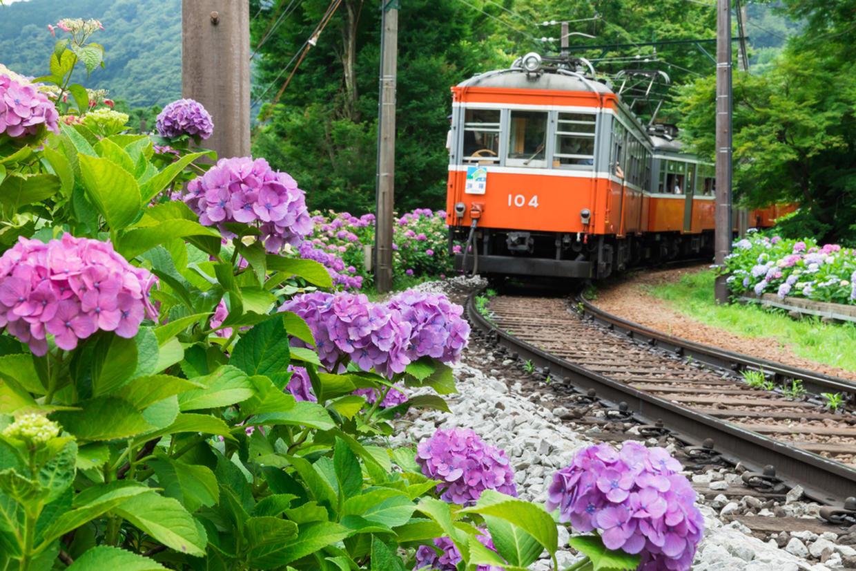 箱根登山電車とあじさい