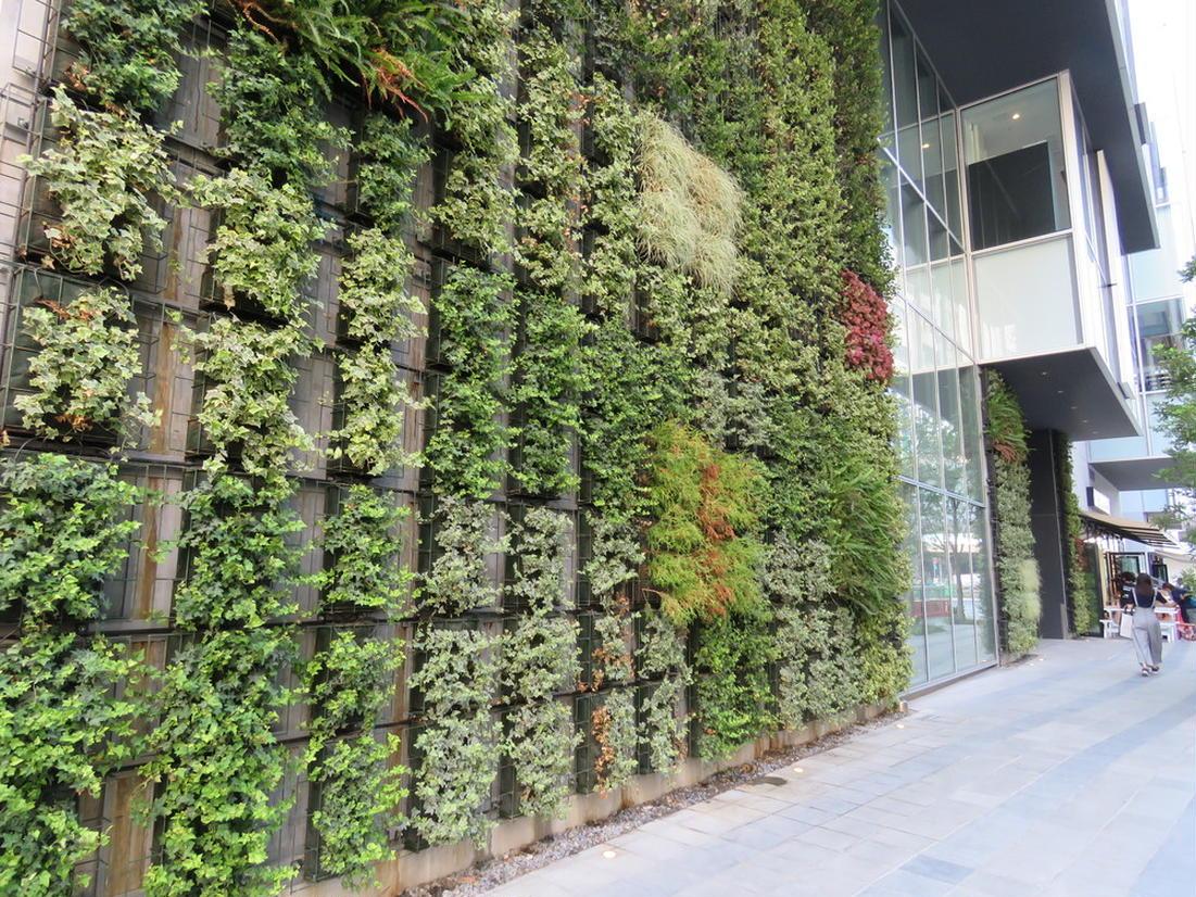 渋谷ストリーム 壁面緑化