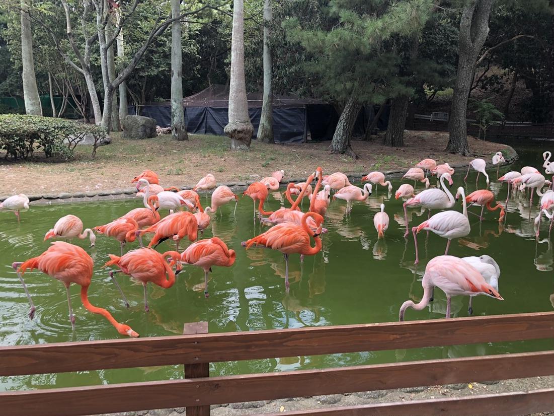 動物の森 フラミンゴ