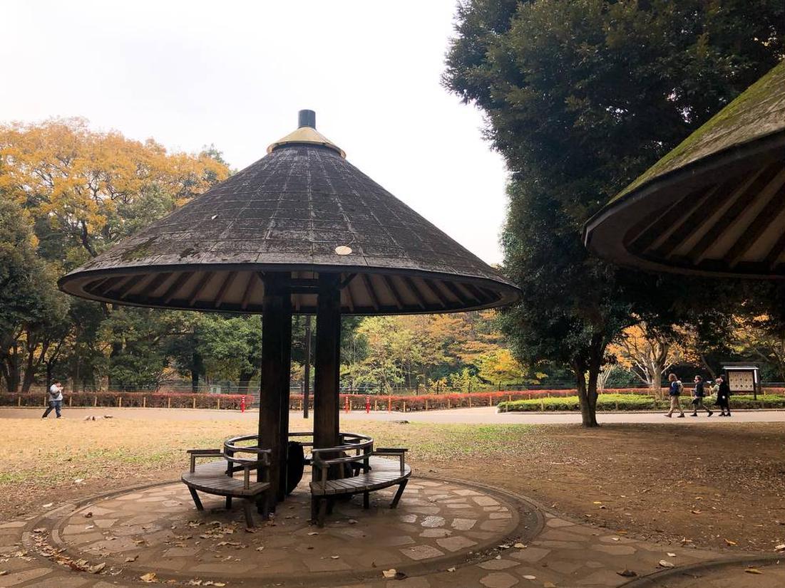 代々木 公園 ドッグラン 登録