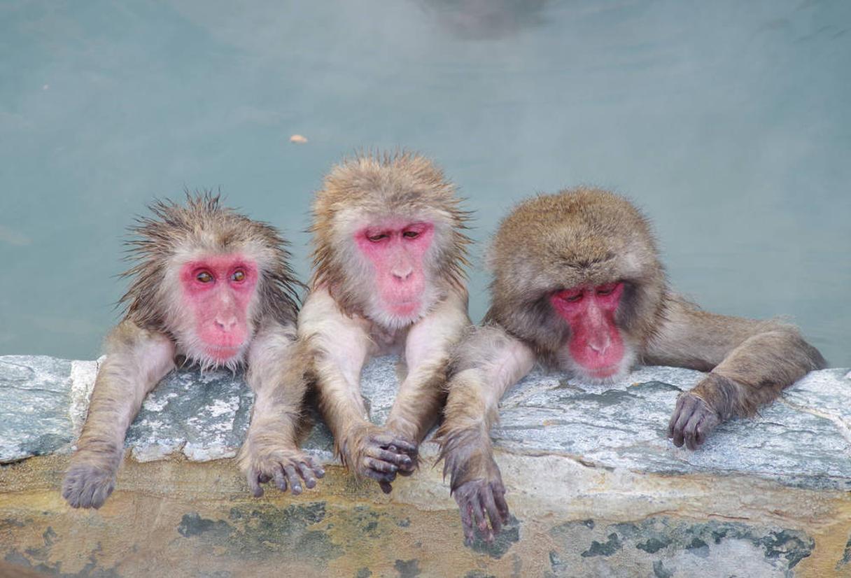湯の川温泉 熱帯植物園のサル イメージ