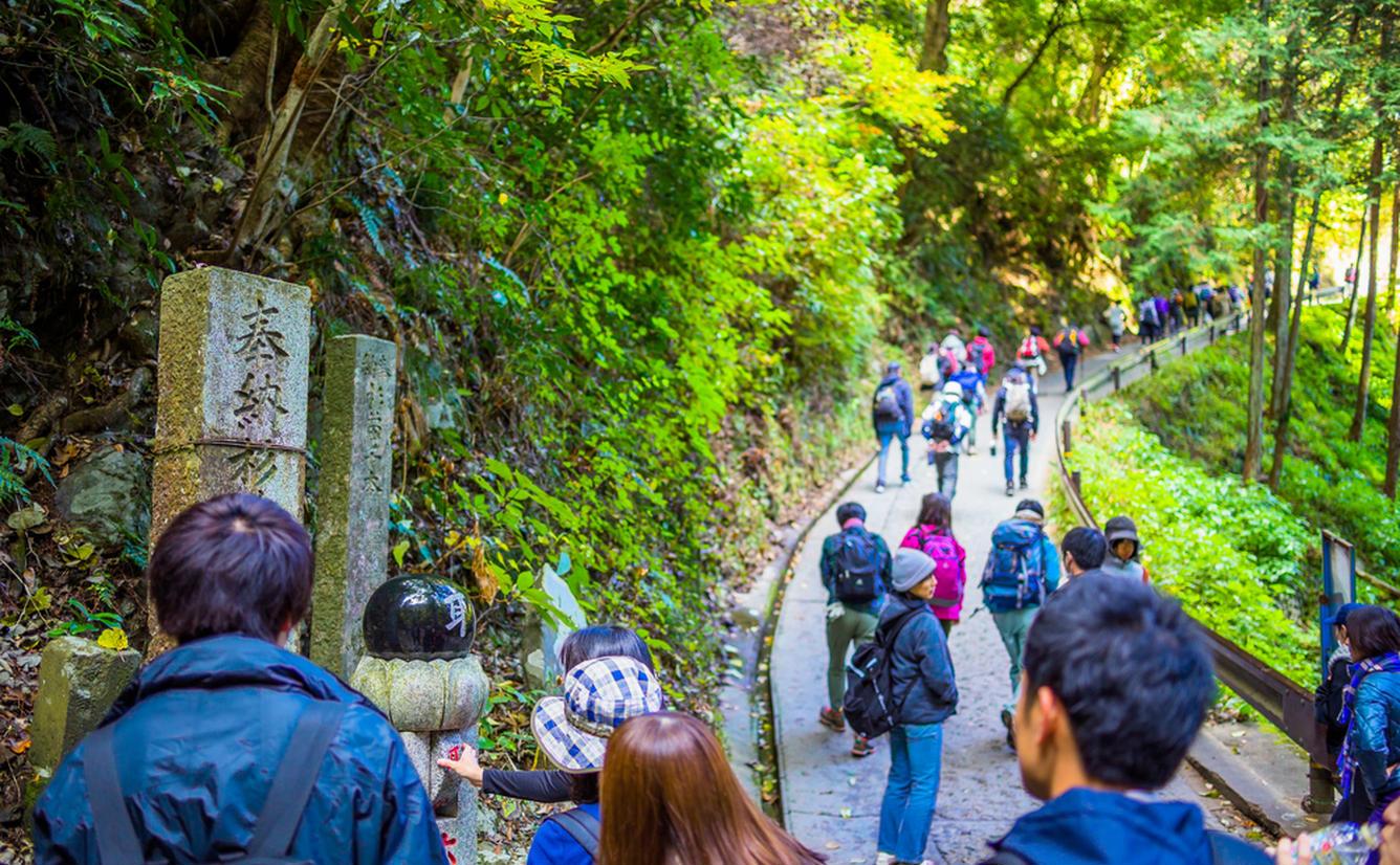 高尾山の一番人気の登山コース「自然研究路1号路」を紹介!のカバー画像