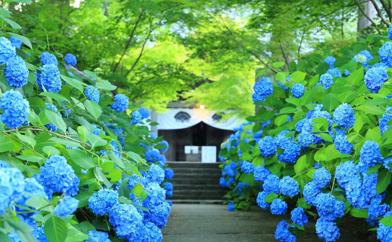 【秋田観光】2020年7月はここをチェック!のカバー画像