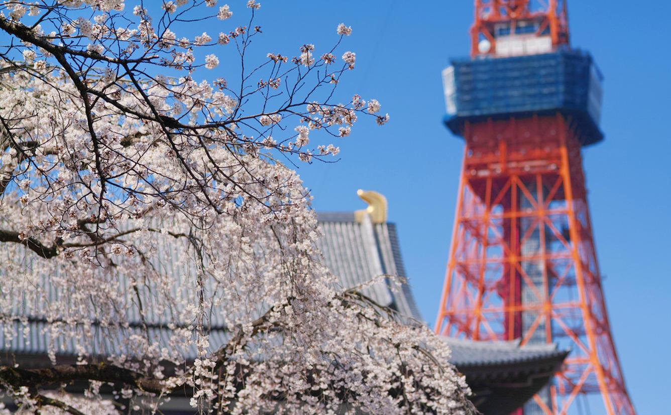 東京旅行ガイド!人気エリアや見どころ・アクセス情報が満載!のカバー画像