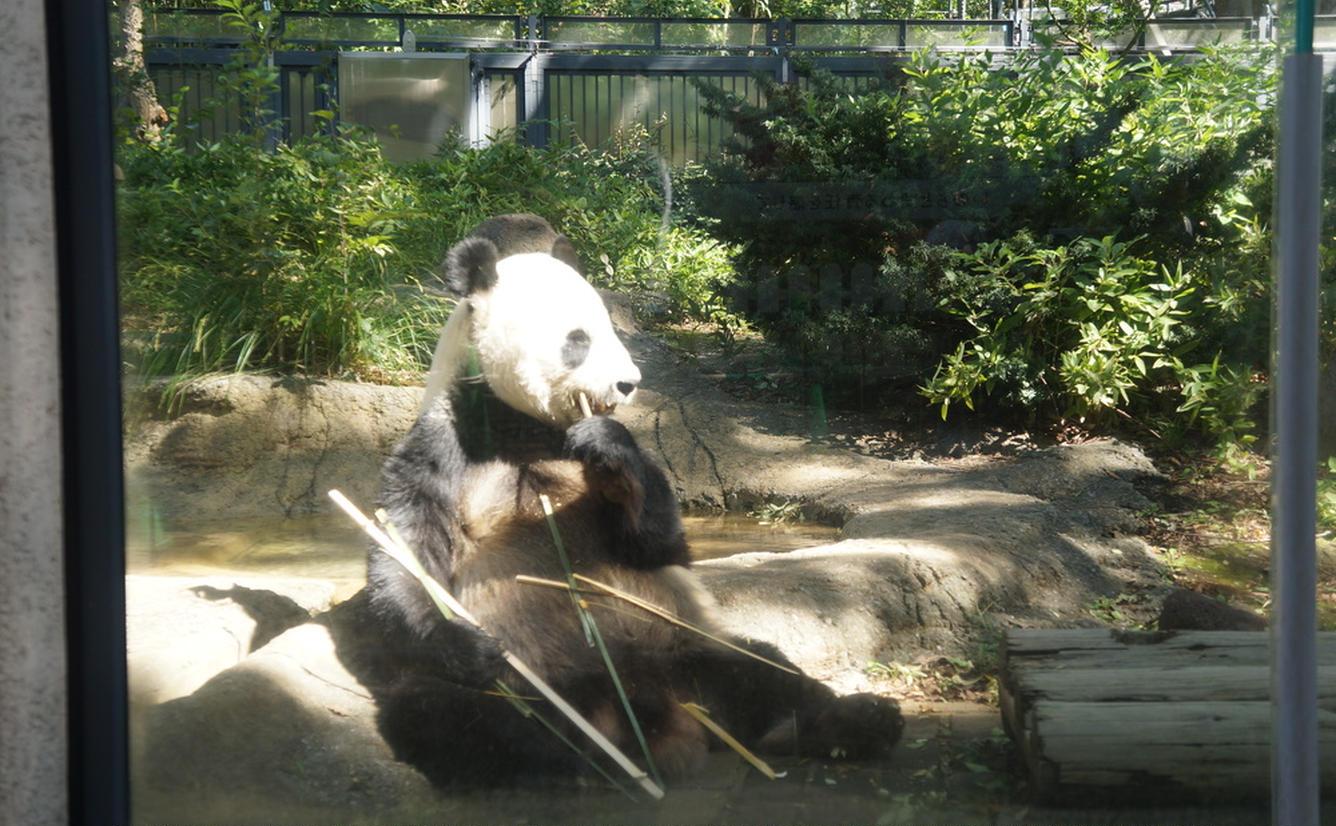 動物園 上野