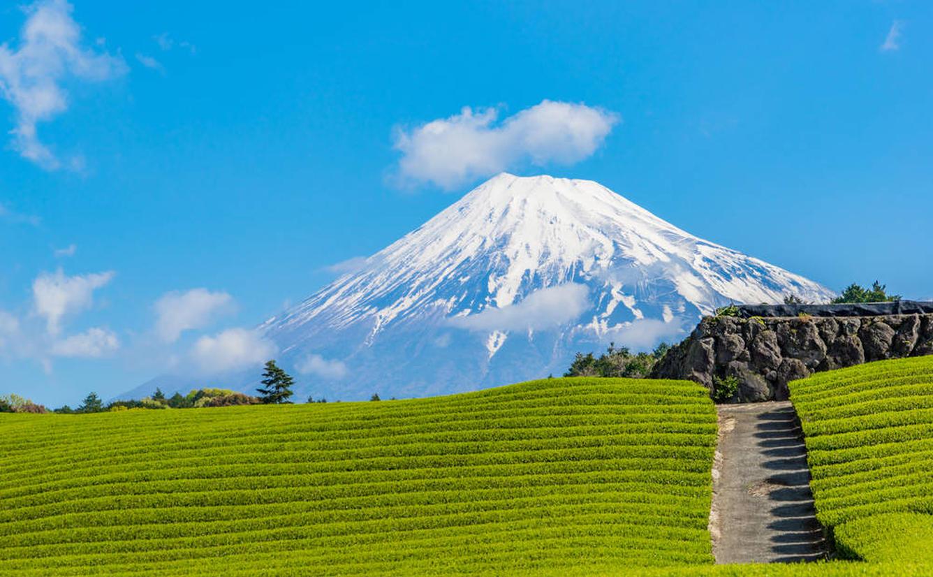 【静岡県観光スポット紹介】動物や自然に触れ合えるスポットから絶景スポットまでおすすめスポット30選のカバー画像