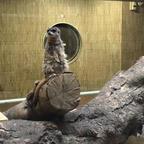 都立動物園・水族園で冬にしか味わえない魅力満載のキャンペーン「Visit ほっと Zoo 2020」を実施