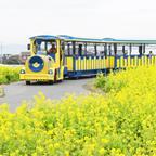 約10万本の菜の花が見頃に!三浦半島にある「長井海の手公園 ソレイユの丘」で一足早い春を鑑賞
