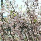 「スプリングフェスティバル」開催!フォトジェニックなお花見を体験型水族館アクアマリンふくしまで楽しもう