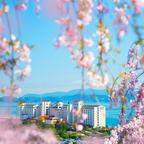 しだれ桜450本×お花見弁当×天然温泉×絶景釣り堀×スイーツを満喫!癒やしの春旅日帰りプラン