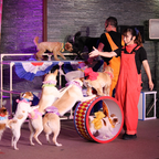 北海道洞爺サンパレスリゾート&スパにて大人気イベント「わんわん大サーカス」を開催!