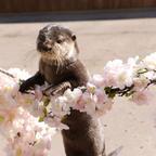 横浜・八景島シーパラダイスでお花見体験ができるイベント「はるパラ!」開催