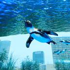 """4/17から10日間限定で特別プログラム実施!""""世界ペンギンの日""""in サンシャイン水族館"""