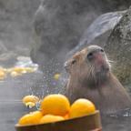 伊豆シャボテン動物公園グループに春がくる!~SPRING2020~