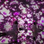 """期間限定でアート空間が桜に!裸足で超巨大な作品の中に身体ごと没入""""水に入るミュージアム"""""""