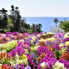 待ちに待った華やかなシーズン到来!カラフルに彩られた園内各所での花々の競演を楽しむ