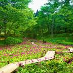 初夏イベント「天空の花さんぽ」初開催!六甲山の爽やかな風を感じながら貴重な植物観賞