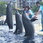 イルカとトレーナーの友情と躍動感を届ける新しいパフォーマンス 「YEAH!!」
