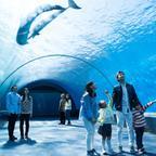 「横浜・八景島シーパラダイス」で安心・安全に夏の水族館を楽しもう!サマースプラッシュフェス開催