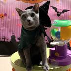 魔法使いや使い魔に扮した動物たちに会えるハロウィンイベントが横浜で開催!お得なナイトパスポートも