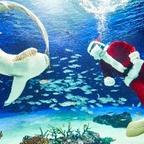 サンシャインシティで海外のクリスマスを体感!子どもから大人まで楽しめるイベントを開催