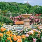 関東最大級のバラの名所で春のイベント開催中!香りと光の大型アート作品や7つのミニガーデン