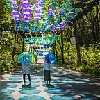 約800本のカラフルな傘が広がる非日常の空間!新緑が眩しい「メッツァビレッジ」で開催中