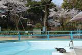横浜市野毛山公園
