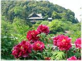 奈良、花と観音さまのお寺で楽しいお参りを…!