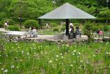 花菖蒲の名所