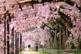 京都 なからぎの道