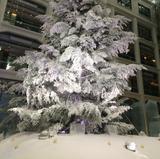 東京の大きなクリスマスツリーを見に行く