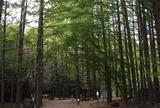 生田緑地公園