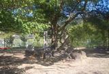 恩智城址公園
