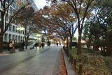 大阪市役所横の通り