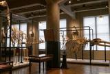 東京大学総合研究博物館 インターメディアテク
