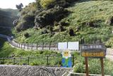 灘黒岩水仙郷