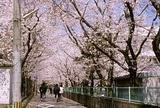 大分県立上野丘高等学校
