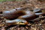 にょろにょろ~とヘビの観察