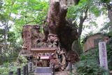 来宮神社の大クス