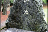 阿波岐原森林公園のハナショウブ