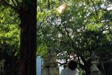 筑後市諏訪神社