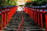 貴船神社から鞍馬山に登る