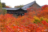 東福寺 通天橋の紅葉