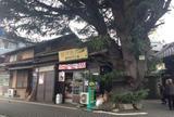 谷中ヒマラヤ杉