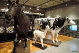東京大学総合研究博物館 本館