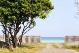 茂木浜海水浴場
